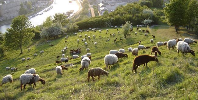 Csc moutons 2010 05 650x330